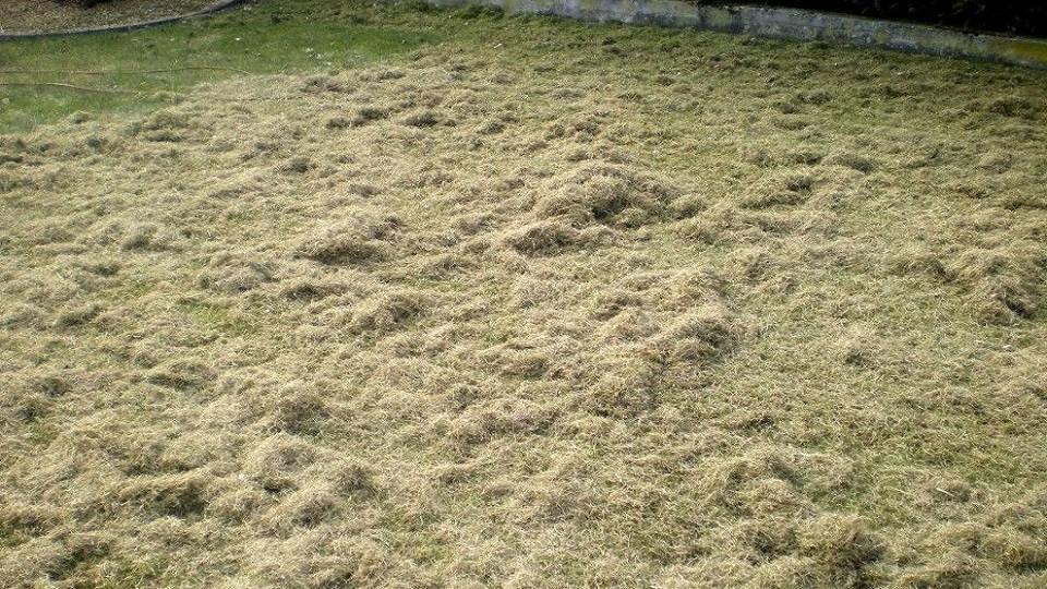 Travail de la pelouse