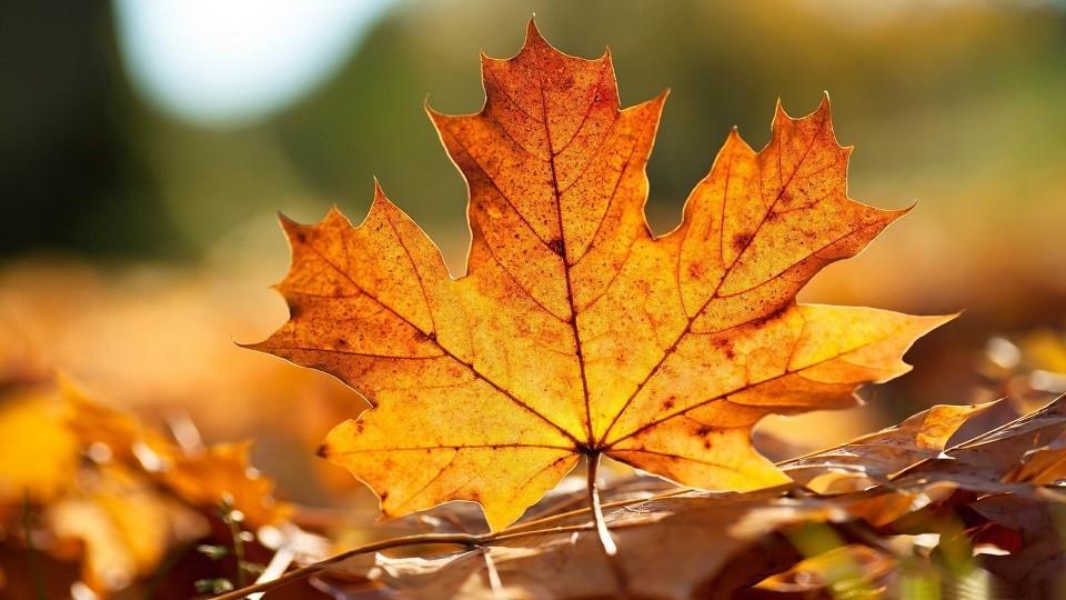 Aspirateur de feuilles autotracté